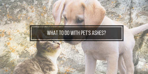 What To Do With Pet Ashes Consider Turning Them Into Memorial Diamonds