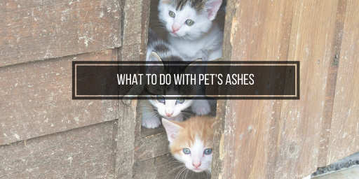 What To Do With Your Pet S Ashes 5 Suggestions